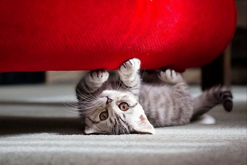 кот царапает диван
